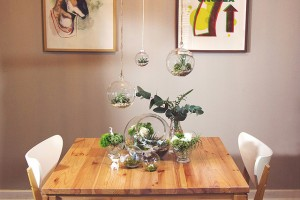 Plants, succulents, glass, apartment, table, DIY