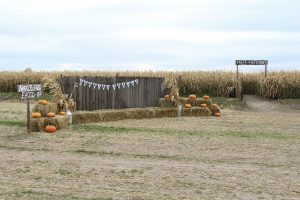 The entrance to the new Corn Maze which also includes some other free features. (James Richards, Scroll Photography)
