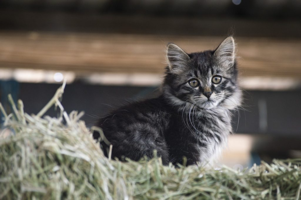 A kitten rests at the top of a pile of hay.