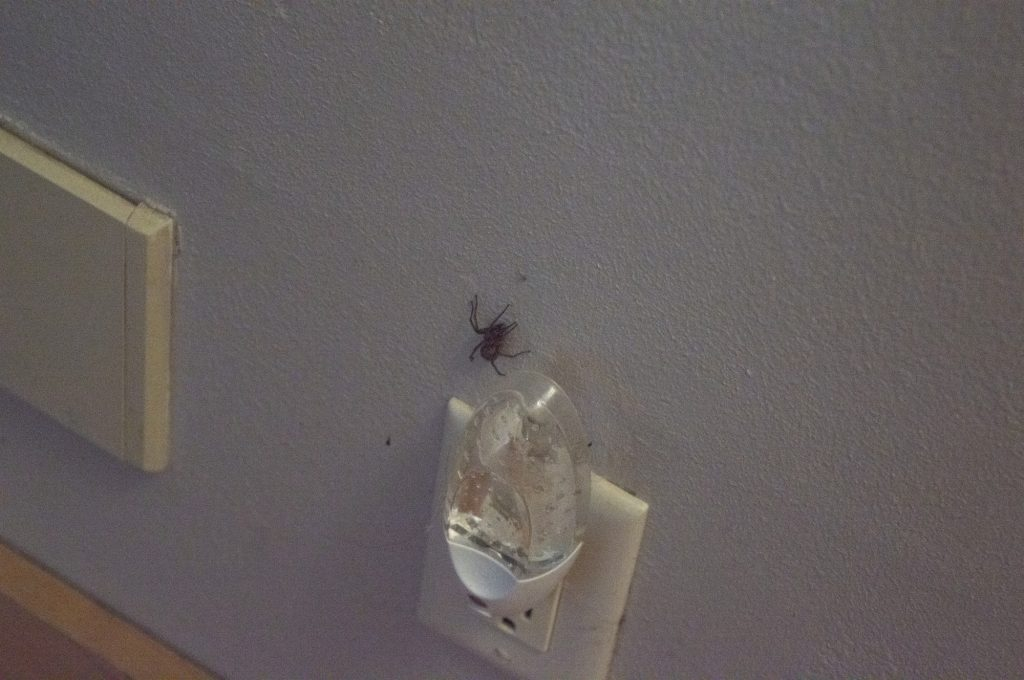 A large spider rests near a scented air freshener.
