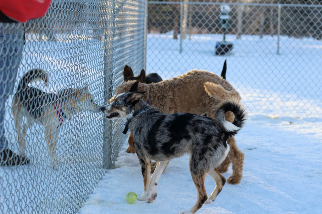 dogs by fence